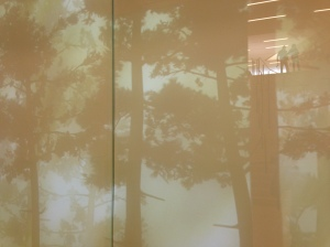Trees in the Museum